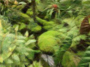 Lovely green glen in the Atlanta Botanical Gardens