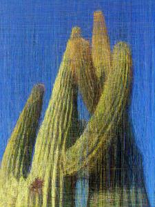 Saguaro cactus north of Phoenix